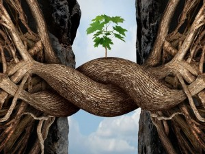 Doelgroepenbeleid en prestatie afspraken